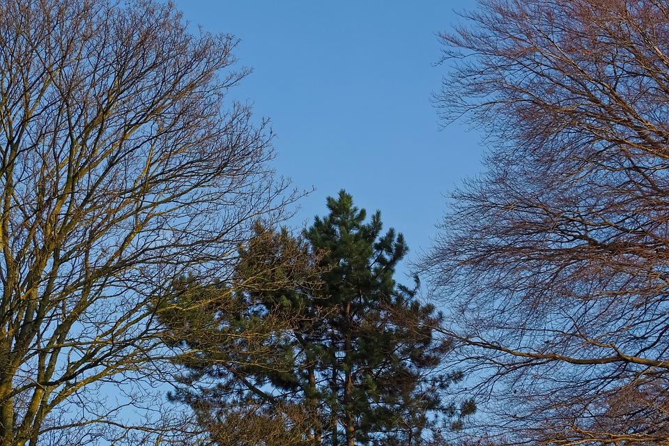 Trees, Nature, Landscape, Wood, Sky, Blue, Forest