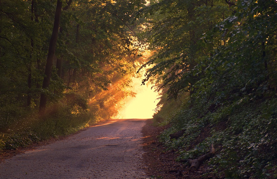 Forest, Path, Sunset, Sunlight, Way, Dusk, Trees, Woods