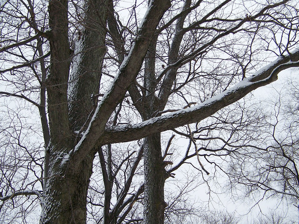 Trees, Snow, Nature, Forest, Woods, Winter