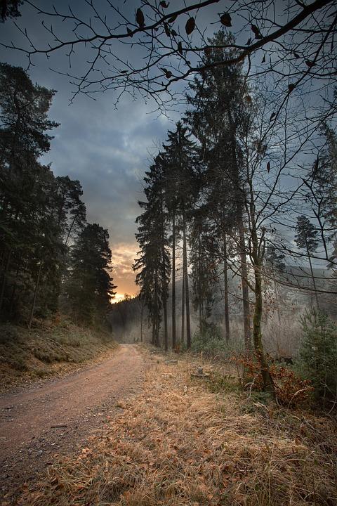 Sunrise, Trees, Forest, Nature