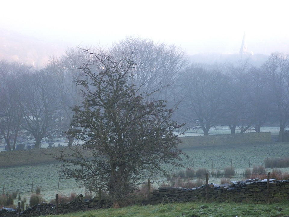 Trees, Mist, Morning Mist, Dew, Misty, Cold, Frost
