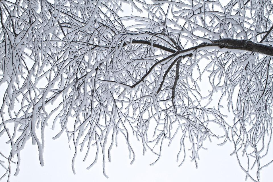 Trees, Frost, Winter, Cold, Landscape, Ice, Outdoor