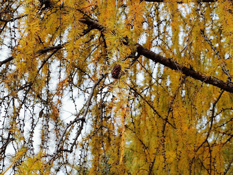 Autumn, Mountain, Trees, Fruit