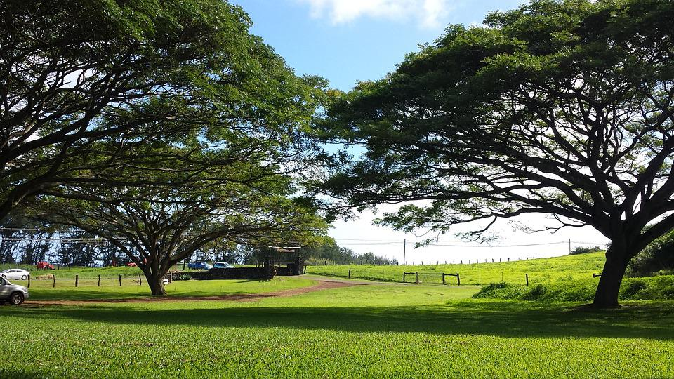 Trees, Touching, Cover, Grass, Park, Trunk