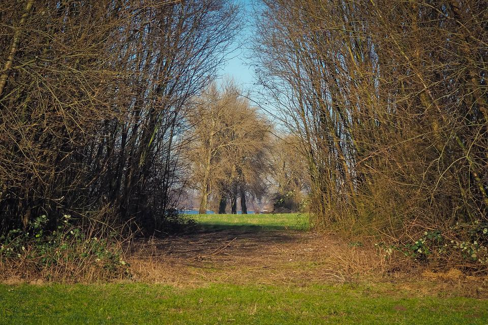 Trees, Nature, Landscape, Grass, Wood, Meadow, Rural