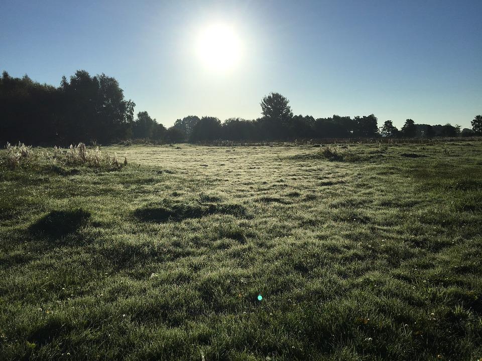Meadow, Trees, Rest, Landscape, Nature, Sky, Green, Fog