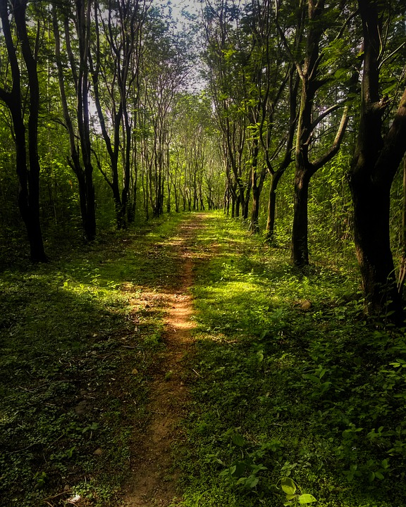 Trees, Forest, Nature, Tree, Path, Mystical, Green