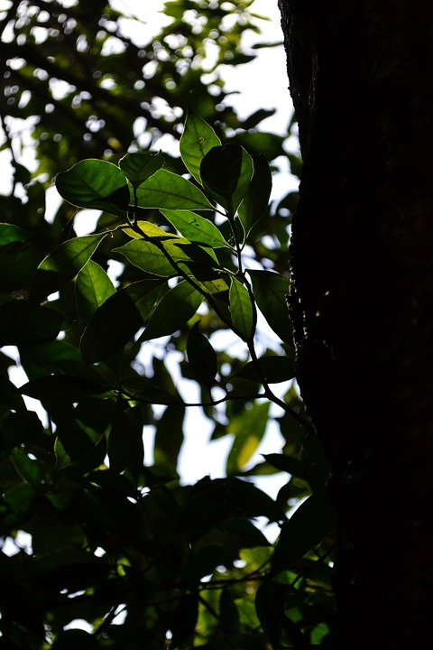 Trees, Branches, Greenery, Leaves, Trunks, Woods