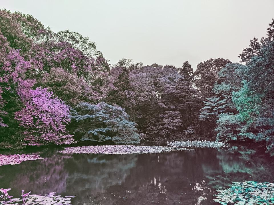 Tree, Lake, Landscape, Trees, Reflection, Calm, Sunrise