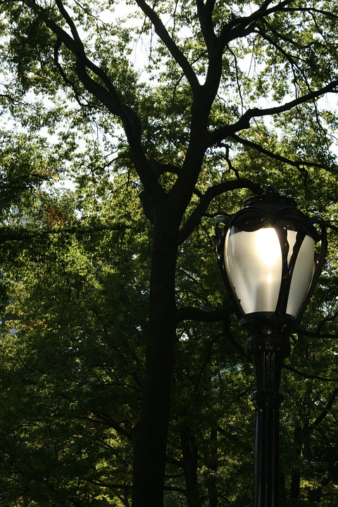 Street Lamp, Lamp, Tree, Trees, Nature, Central Park