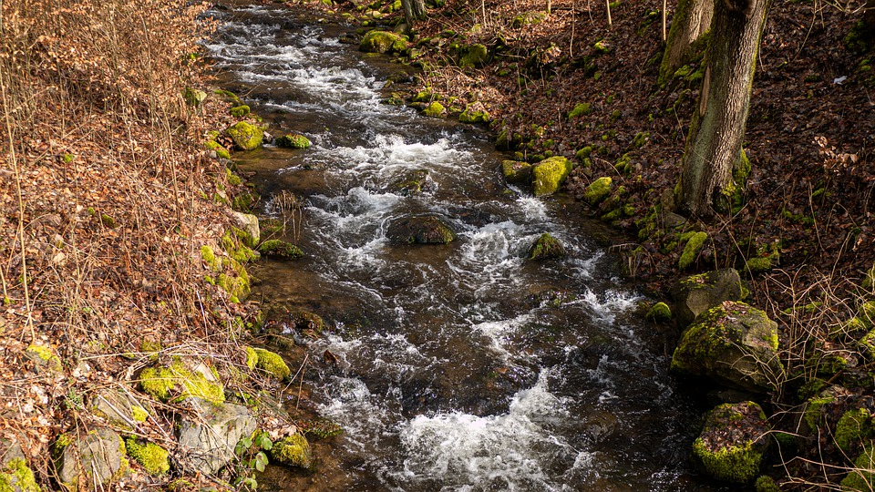 Nature, Water, Forest, Outdoor, Landscape, Trees