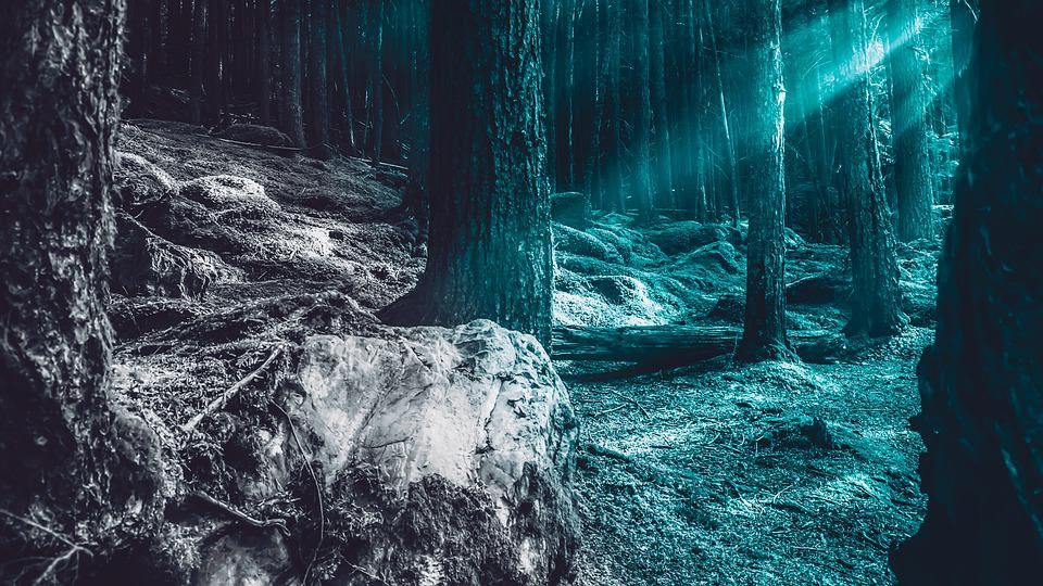 Trees, Night, Moon, Nature, Tree, Landscape, Silhouette