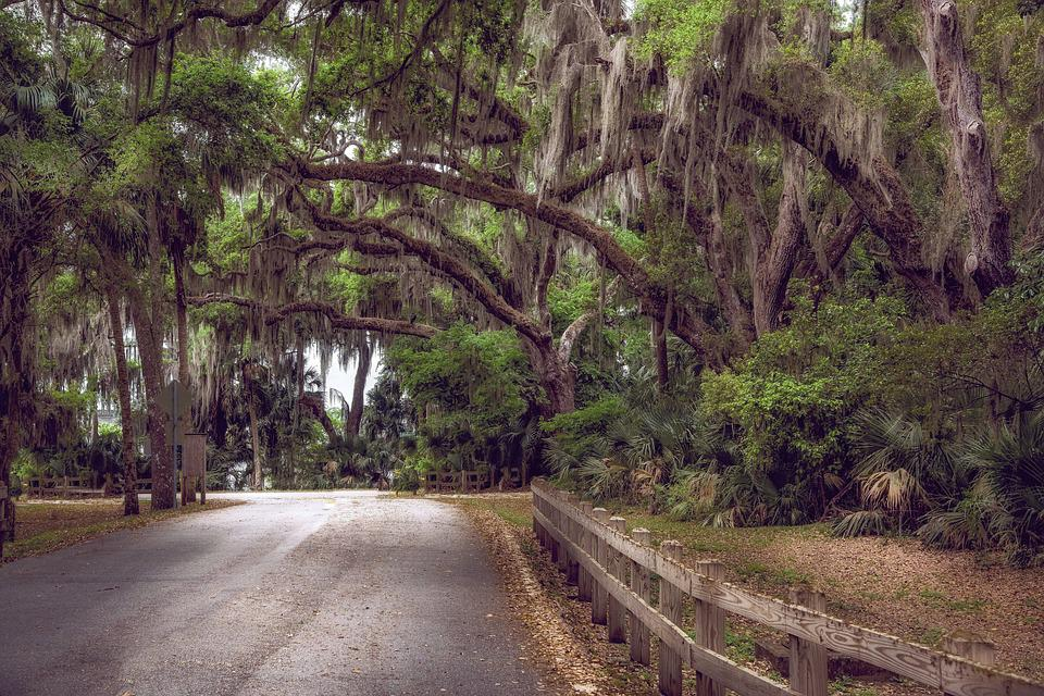 Moss, Trees, Canopy, Florida, Nature, Landscape