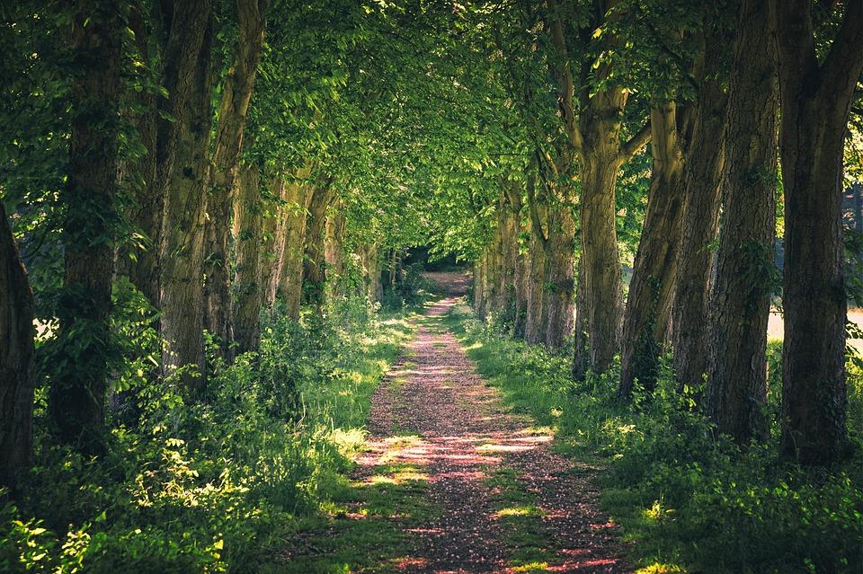 Avenue, Away, Nature, Walk, Trees, Forest, Landscape