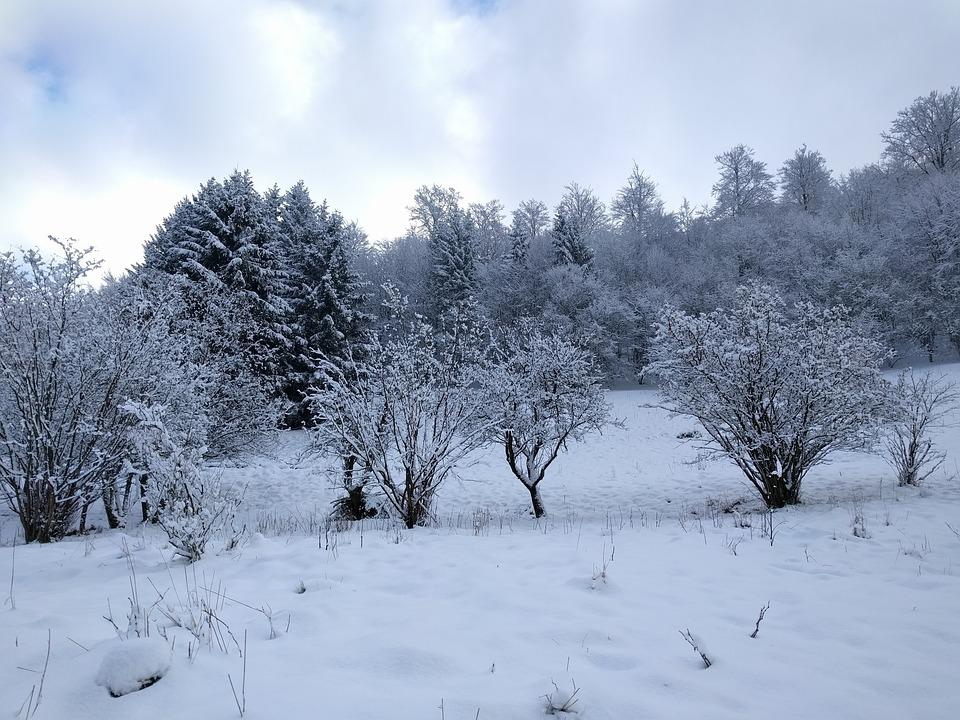 Winter, Landscape, Nature, Trees, Snow, Wintry