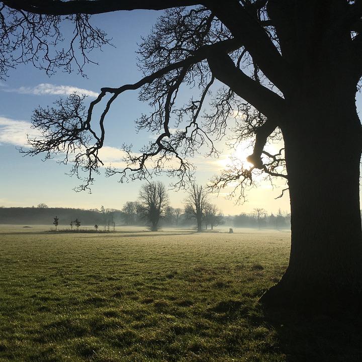 Tree, Sun, Nature, Landscape, Trees, Sunset, Sky