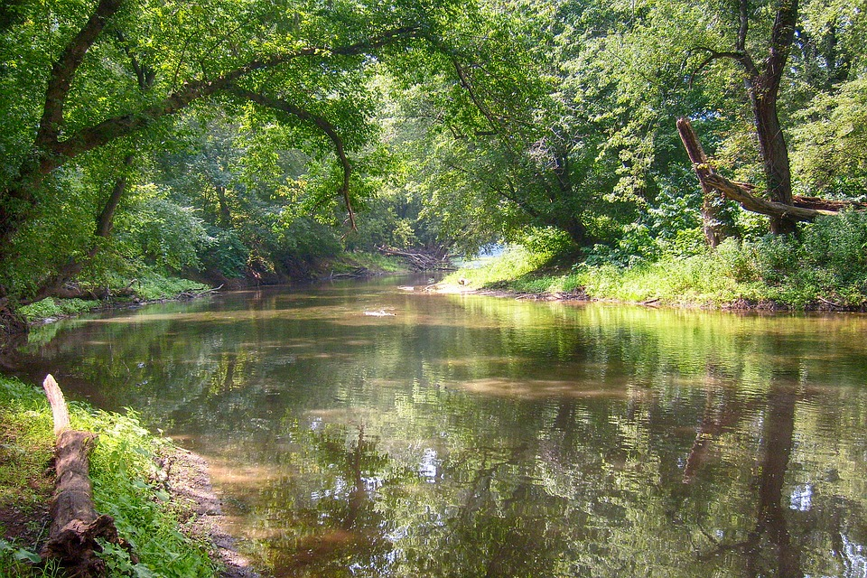 River, Trees, Water, Landscape, Nature, Summer