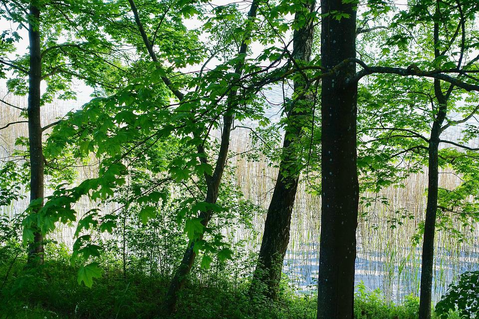 Foliage, Green, Leaves, Trees, Environment, Nature