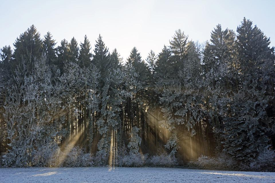 Forest, Trees, Nature, Landscape, Sunlight, Light Beam