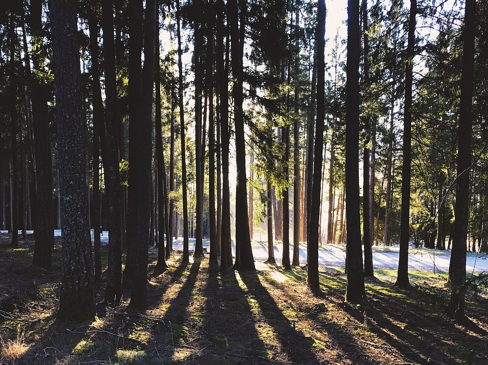 Forest, Trees, Nature, Landscape, Flooded, Light