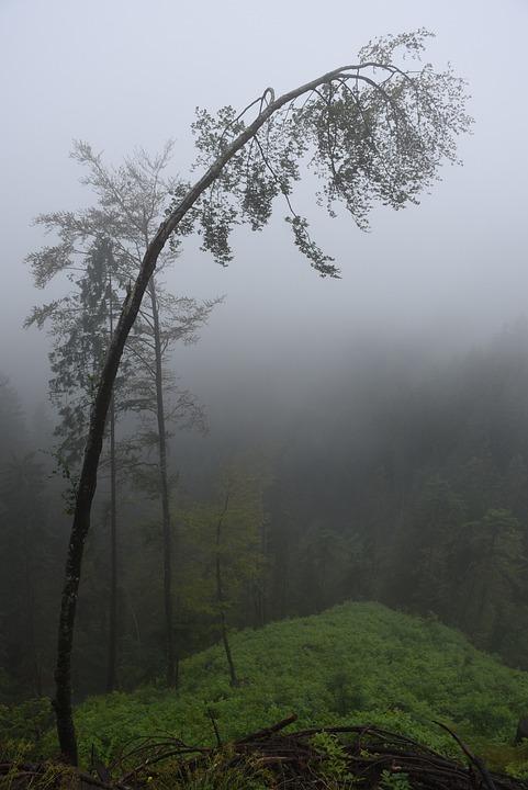 Deciduous Tree, Fog, Trees, Log, Mystical