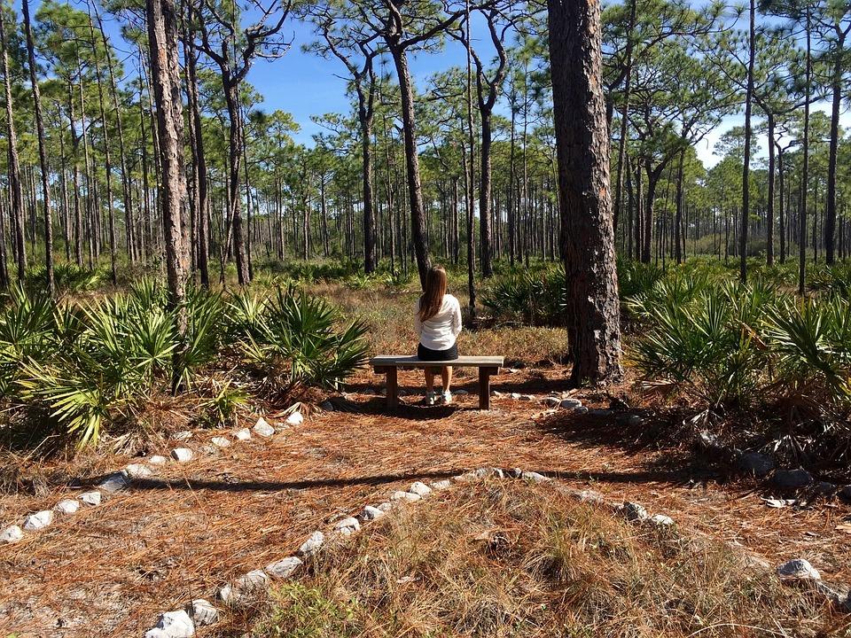 Nature, Contemplation, Reflection, Meditation, Trees