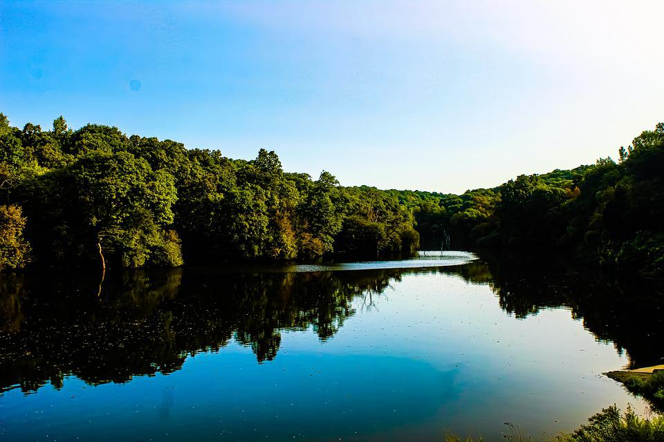 Lake, Trees, Reflection, Mirroring, Mirror Image