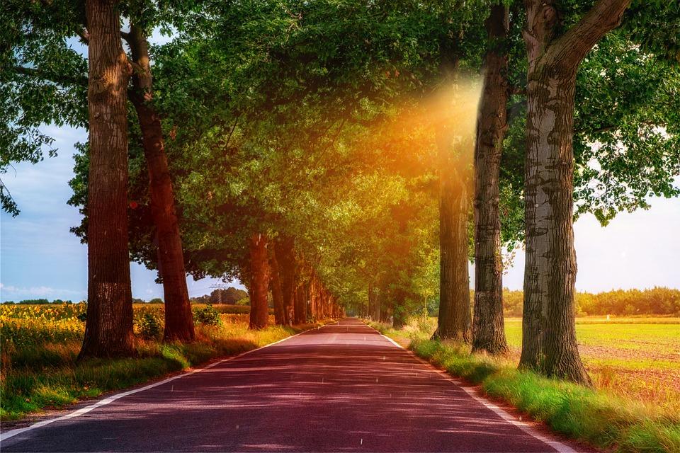 Road, Away, Avenue, Trees, Mood, Landscape, Asphalt