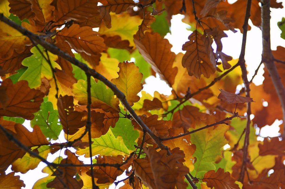 Autumn, Holidays, Nature, Color, Leaves, Trees, Mood