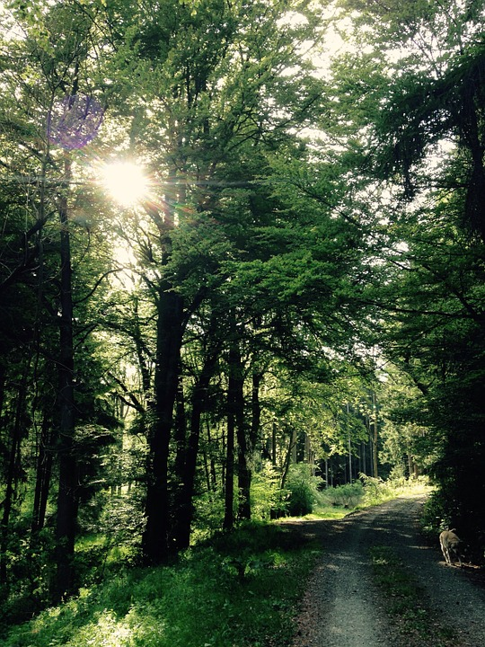 Forest, Away, Sunbeam, Trees, Atmosphere, Mood