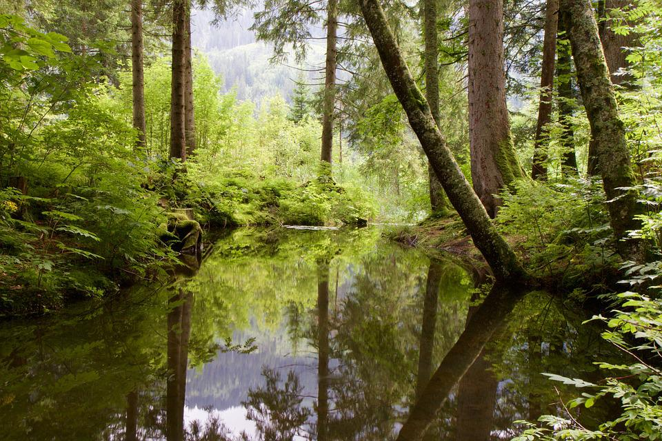 Water, Riet, Moor, Trees