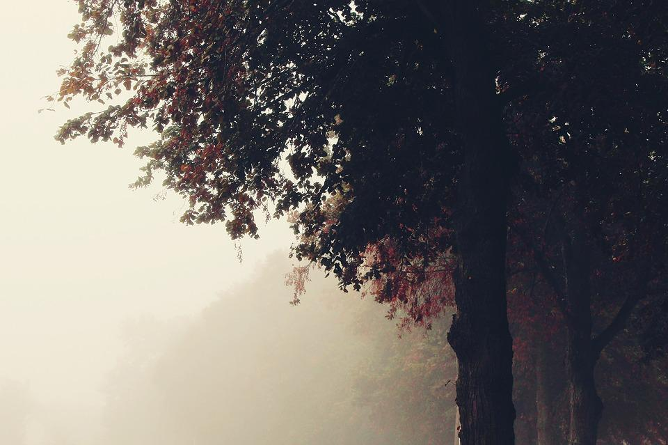Fog, Trees, Nature, Away, Landscape, Autumn, Morning