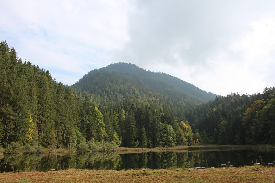 Forest, Lake, Water, Trees, Mountain, Meadow, Clouds