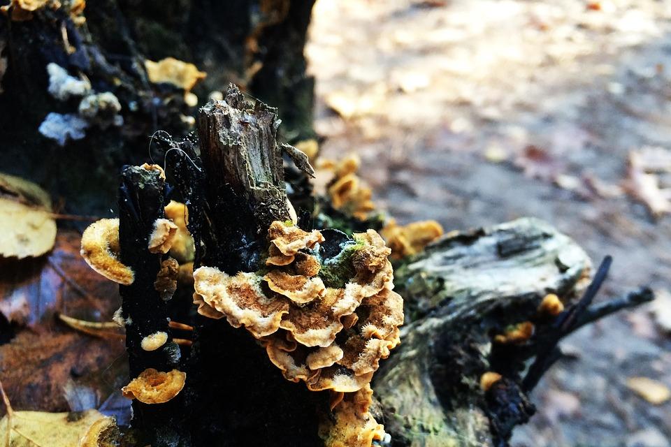 Autumn, Tree Stump, Trees, Mushroom, Nature, Mushrooms