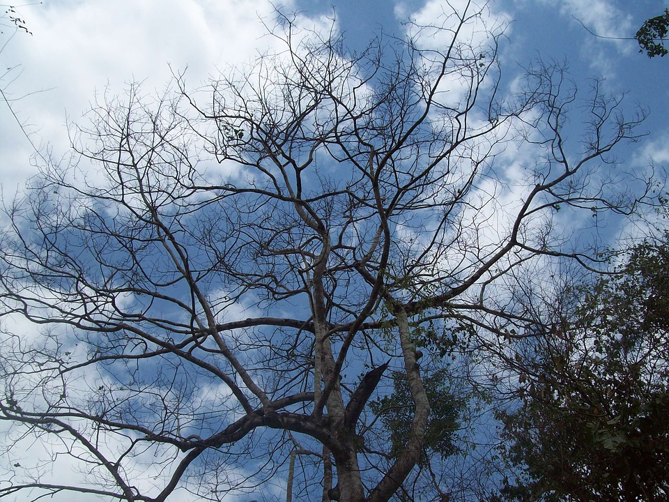 Tree, Sky, Nature, Trees, Branches, Clouds