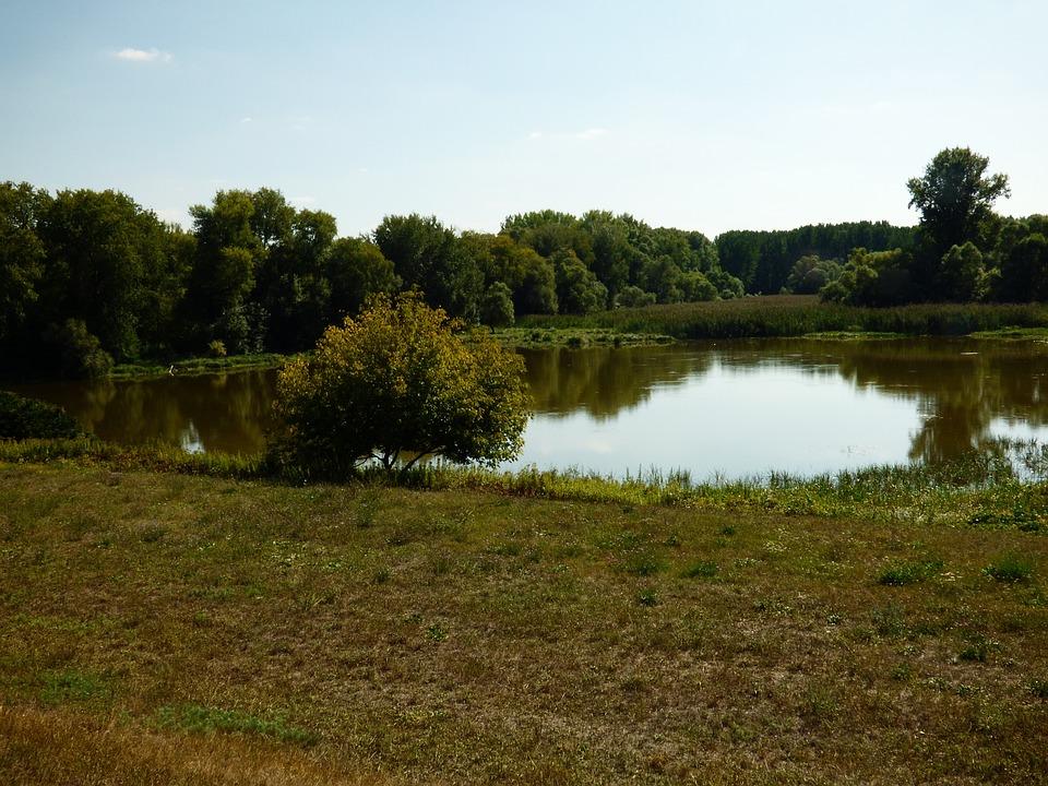 Country, Nature, Trees, Water, Lake, čičovské, Danube