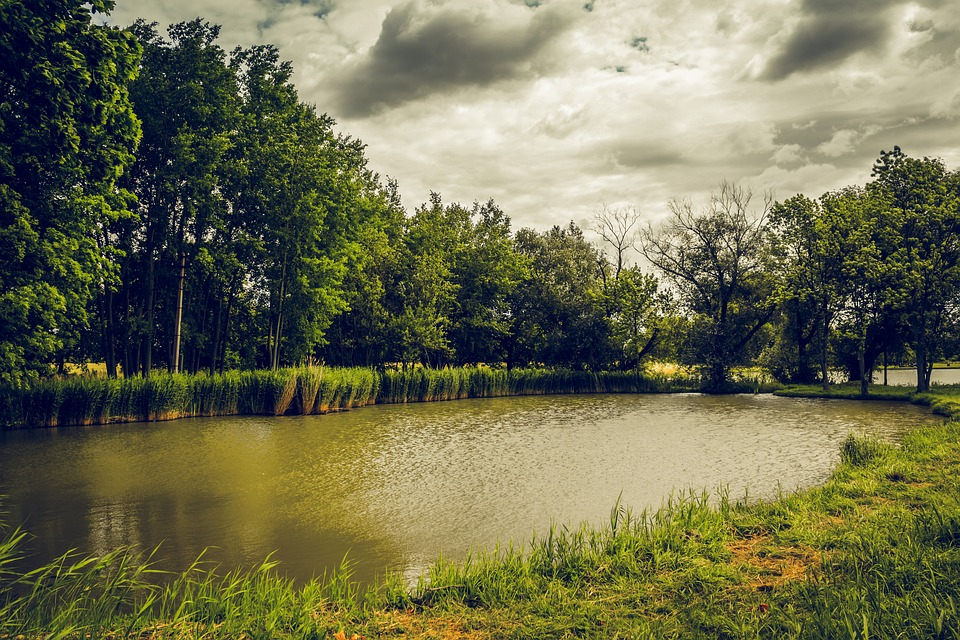 Pond, Clouds, Trees, Grass, Nature, Edge Of The Pond