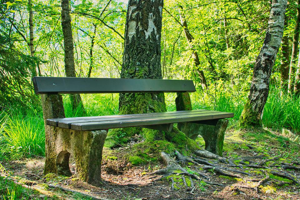 Bench, Wooden Bench, Nature, Forest, Trees, Leaves