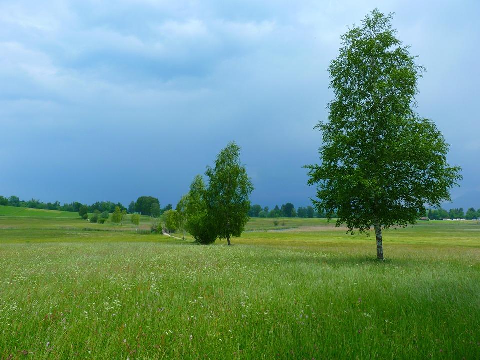 Landscape, Trees, Nature, Gewitterstimmung