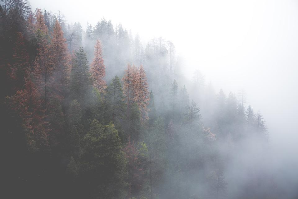 Forest, Misty, Nature, Trees