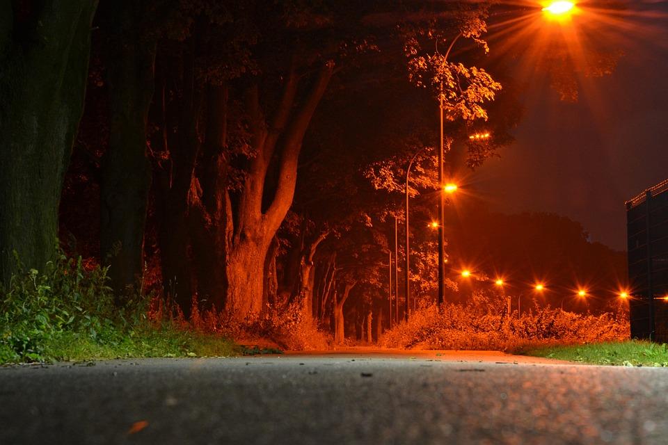 Night, Away, Avenue, Long Exposure, Nature, Trees