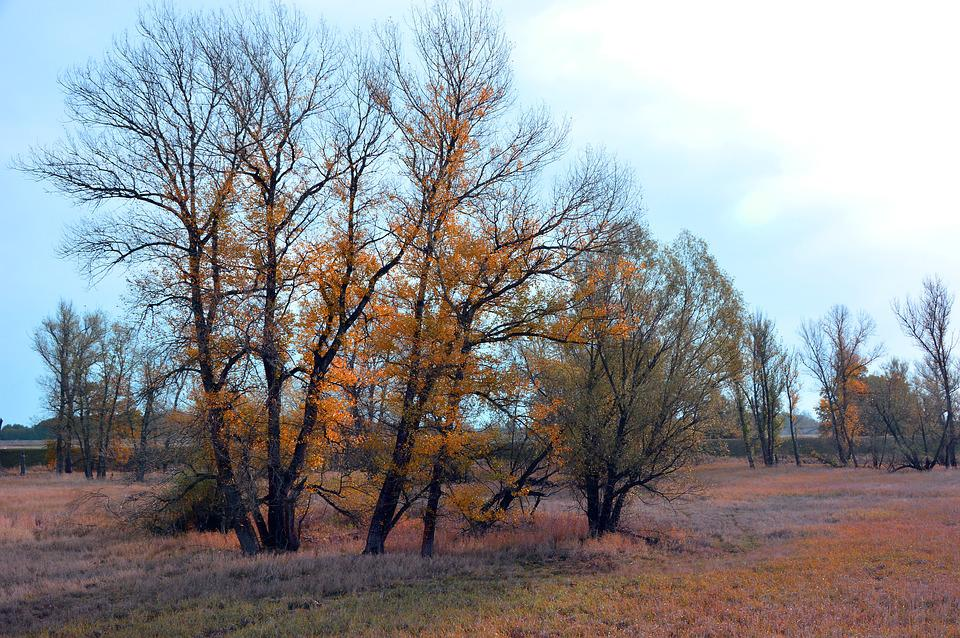 Landscape, Trees, Nature, Reported, Or Meadows, Autumn