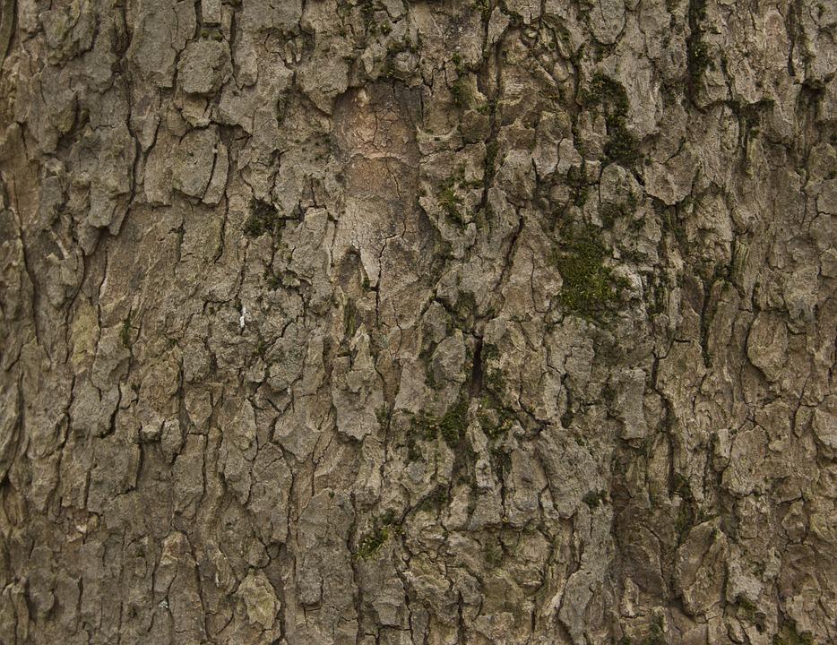 Bark, Tree, Trunk, Trees, Nature, Tree Bark, Rough