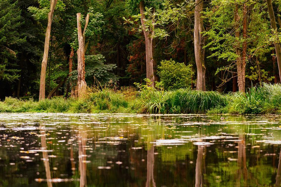 Forest, Lake, Water, Nature, Trees, Reflection, Still