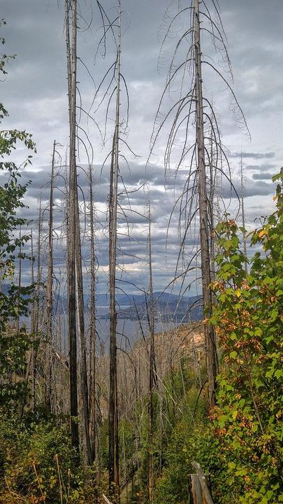 Fire, Trees, Okanagan, Lake