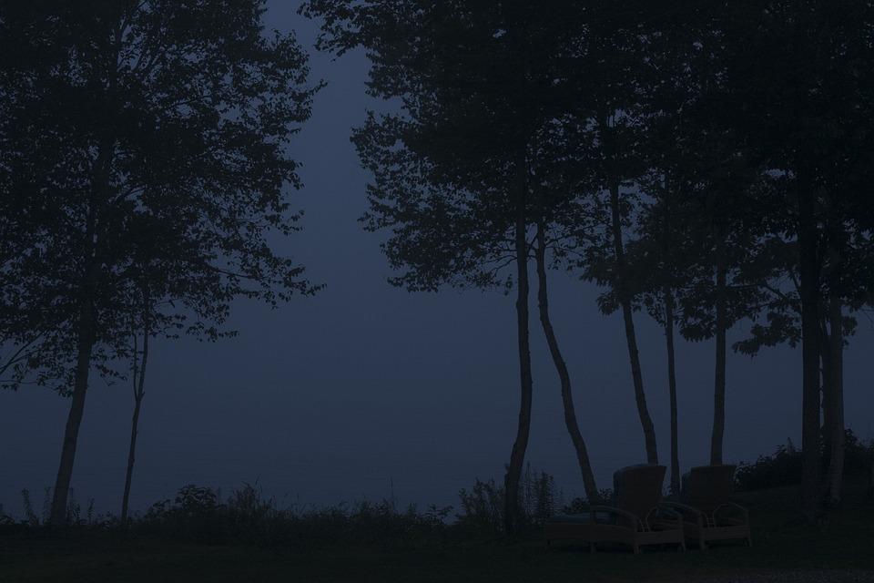 Trees, Night, Silhouette, Dark, Tree, Organic