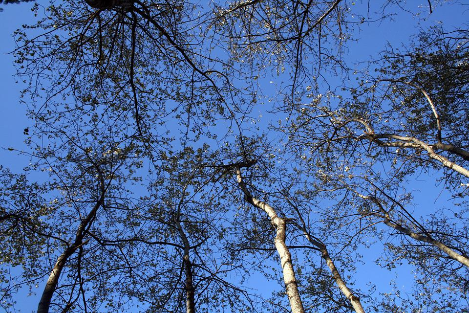 Trees, Sky, Trunk, Leaves, Nature, Outdoor