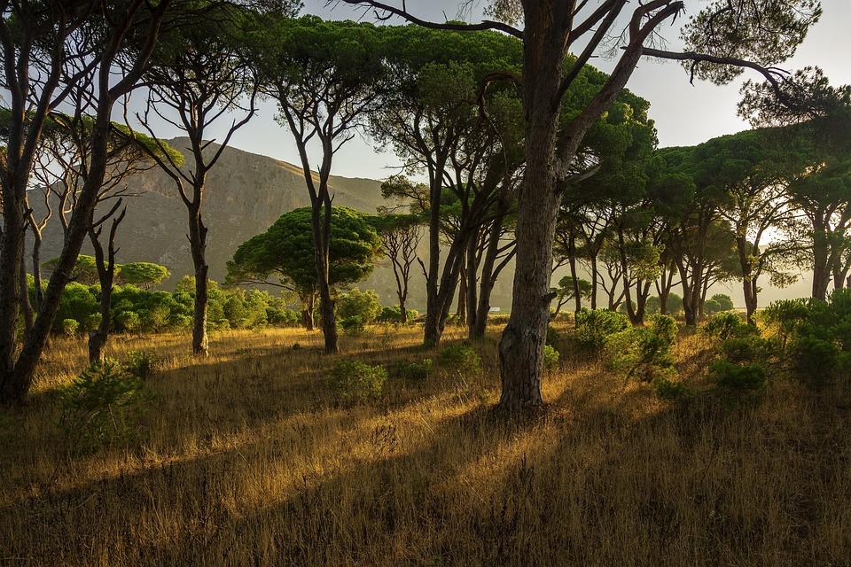 Trees, Forest, Summer, Greece, Landscape, Light, Path