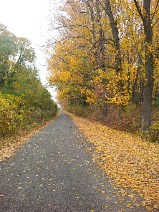 Footpath, Trail, Walkway, Pathway, Trees, Autumn, Fall