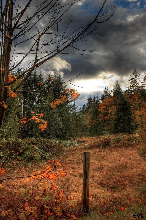 Clouds, Thunderstorm, Rainy, Sky, Nature, Trees